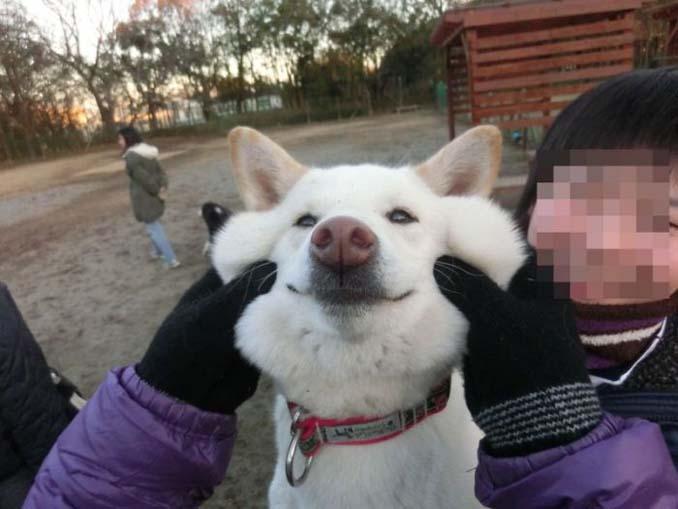 Σκύλοι με μάγουλα που είναι αδύνατον να μην ζουλήξεις (22)