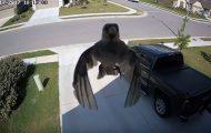 Δείτε τι συμβαίνει όταν τα φτερά πουλιού συγχρονίζονται με τον ρυθμό καρέ κάμερας ασφαλείας
