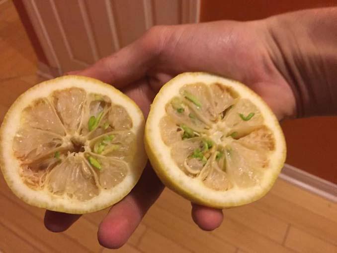 Ανατριχιαστικές εικόνες με φρούτα και λαχανικά που βλάστησαν νωρίς (9)