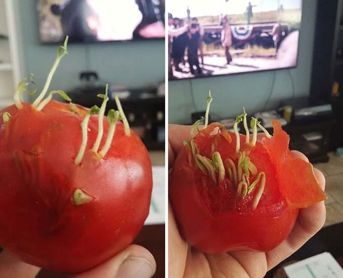 Ανατριχιαστικές εικόνες με φρούτα και λαχανικά που βλάστησαν νωρίς (13)