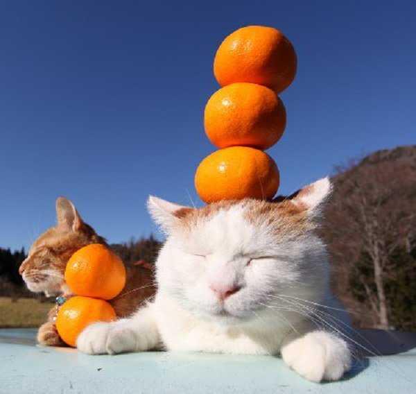 Άρχοντες της ισορροπίας #6 (6)