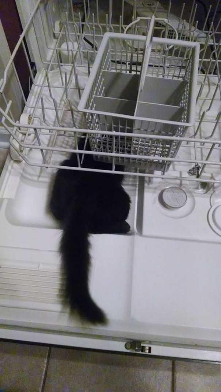 Γάτες που... κάνουν τα δικά τους! #60 (1)