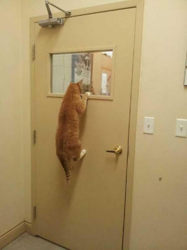 Γάτες που... κάνουν τα δικά τους! #60 (4)