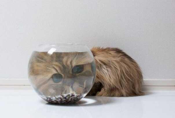 Γάτες που... κάνουν τα δικά τους! #60 (5)