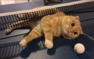 Γάτες που... κάνουν τα δικά τους! #61 (1)