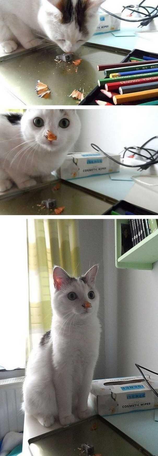 Γάτες που... κάνουν τα δικά τους! #60 (7)