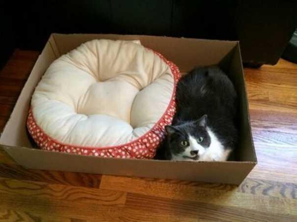 Γάτες που... κάνουν τα δικά τους! #60 (8)