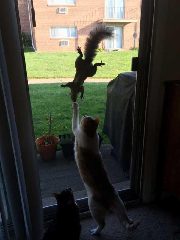 Γάτες που... κάνουν τα δικά τους! #60 (9)