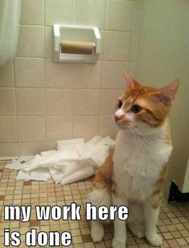 Γάτες που... κάνουν τα δικά τους! #60 (10)