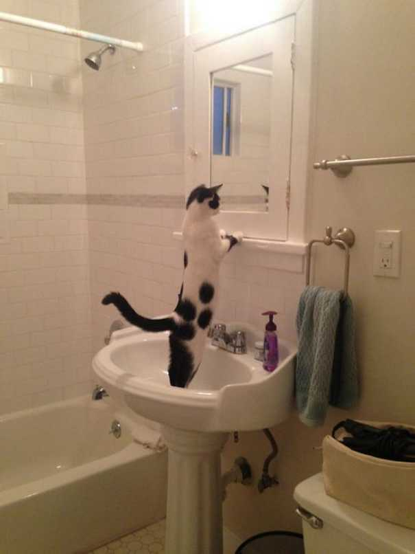 Γάτες που... κάνουν τα δικά τους! #62 (1)