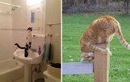 Γάτες που... κάνουν τα δικά τους! #62 (11)