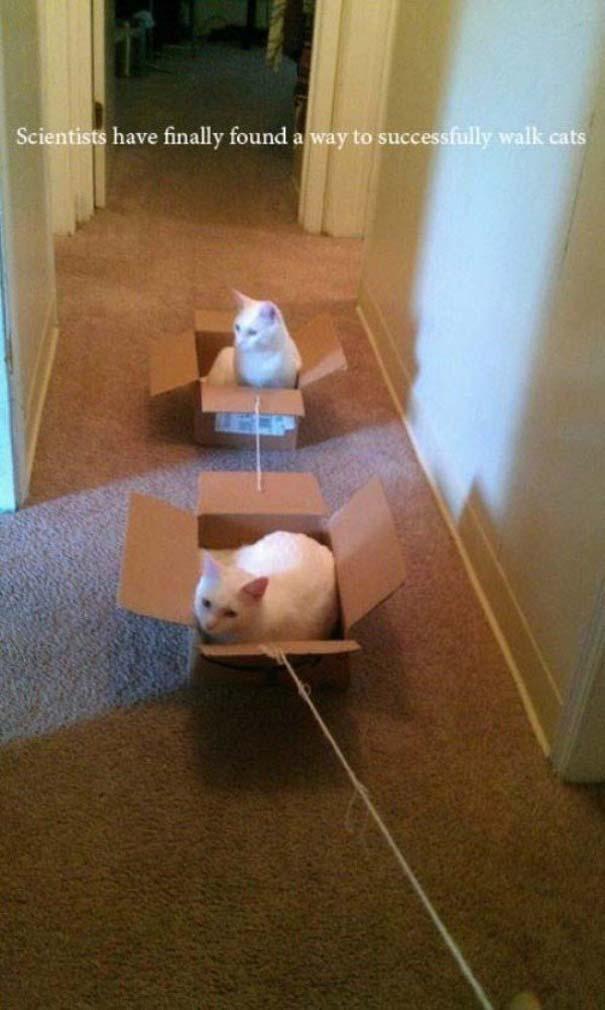 Γάτες που... κάνουν τα δικά τους! #62 (3)