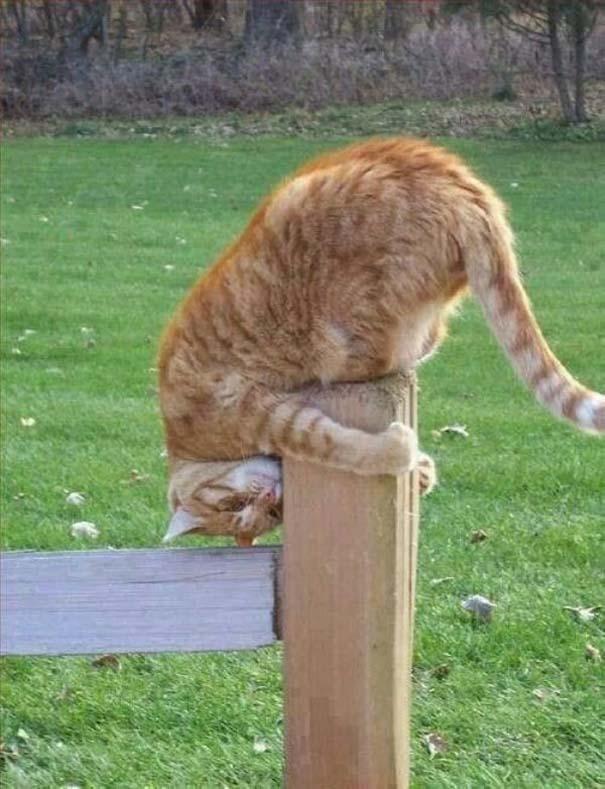 Γάτες που... κάνουν τα δικά τους! #62 (7)