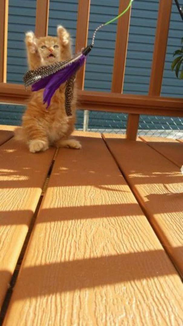 Γάτες που... κάνουν τα δικά τους! #62 (5)