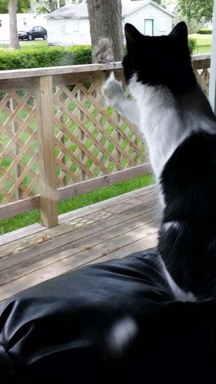 Γάτες που... κάνουν τα δικά τους! #62 (8)
