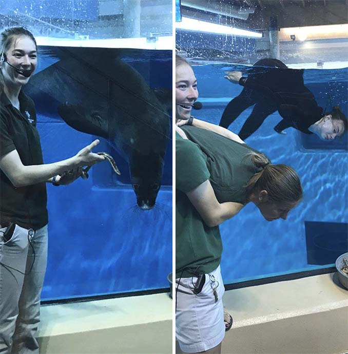 Όταν οι φροντιστές σε ζωολογικό κήπο κάνουν χαβαλέ (2)