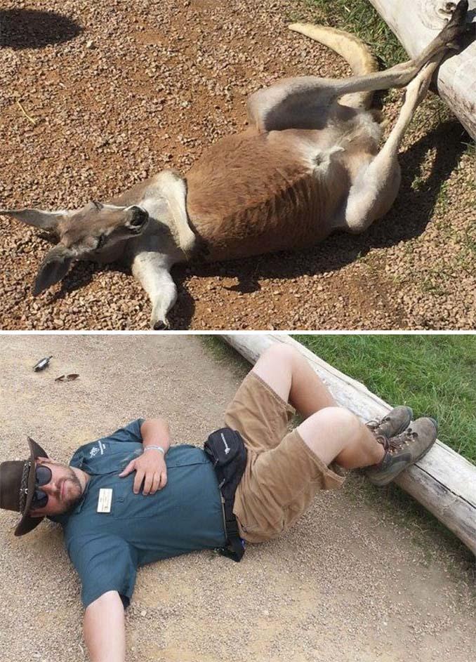Όταν οι φροντιστές σε ζωολογικό κήπο κάνουν χαβαλέ (3)