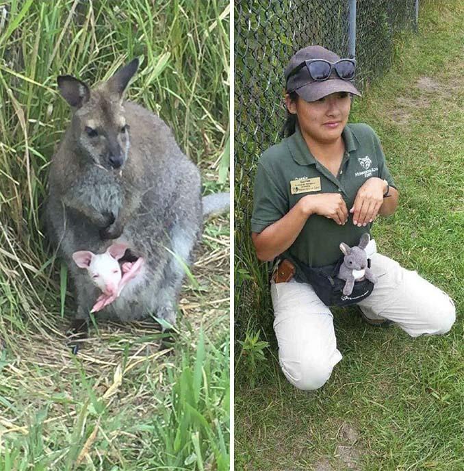 Όταν οι φροντιστές σε ζωολογικό κήπο κάνουν χαβαλέ (8)