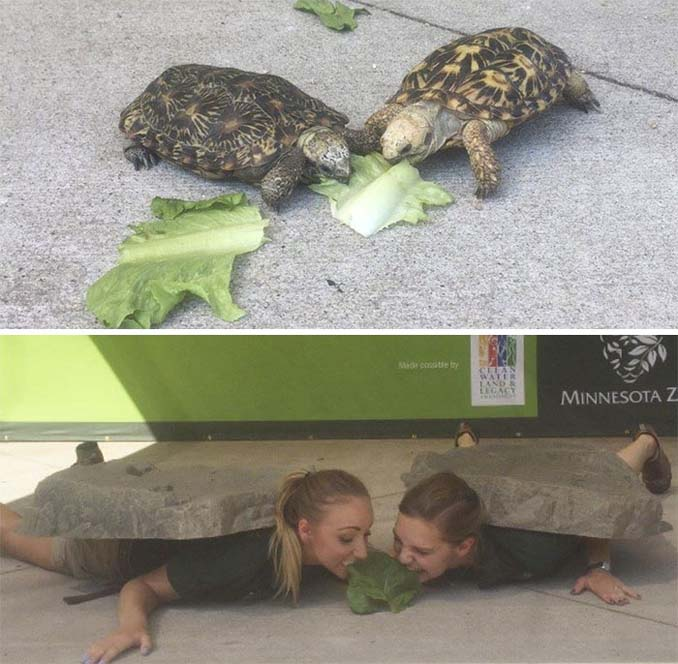 Όταν οι φροντιστές σε ζωολογικό κήπο κάνουν χαβαλέ (13)