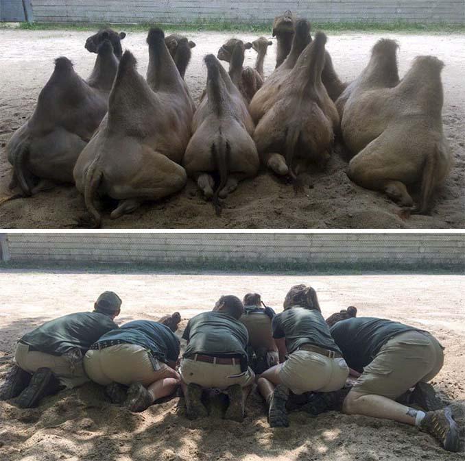 Όταν οι φροντιστές σε ζωολογικό κήπο κάνουν χαβαλέ (14)