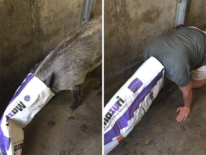 Όταν οι φροντιστές σε ζωολογικό κήπο κάνουν χαβαλέ (15)