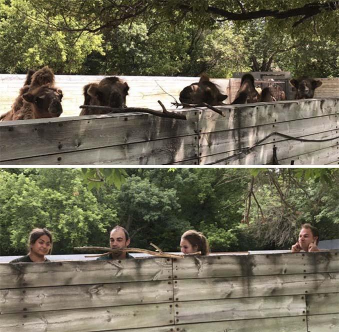 Όταν οι φροντιστές σε ζωολογικό κήπο κάνουν χαβαλέ (16)