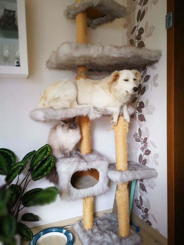 Σκύλοι που μάλλον νομίζουν πώς είναι γάτες (2)