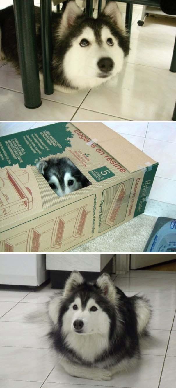 Σκύλοι που μάλλον νομίζουν πώς είναι γάτες (6)