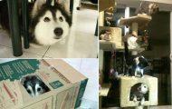 20+ σκύλοι που μάλλον νομίζουν πώς είναι γάτες