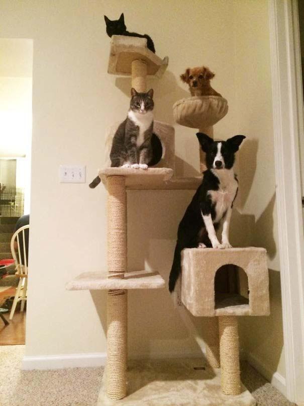 Σκύλοι που μάλλον νομίζουν πώς είναι γάτες (14)
