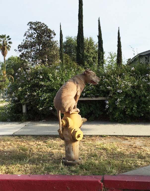 Σκύλοι που μάλλον νομίζουν πώς είναι γάτες (15)