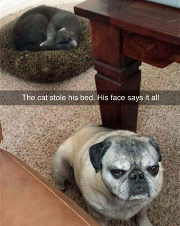 Φωτογραφίες σαν το σκύλο με τη γάτα (1)