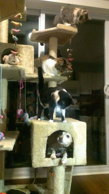 Φωτογραφίες σαν το σκύλο με τη γάτα (2)