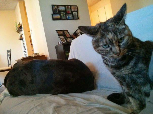 Φωτογραφίες σαν το σκύλο με τη γάτα (4)