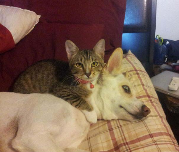 Φωτογραφίες σαν το σκύλο με τη γάτα (5)