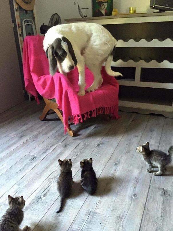 Φωτογραφίες σαν το σκύλο με τη γάτα (6)