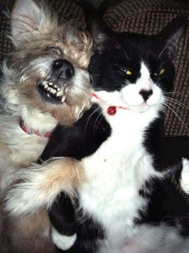 Φωτογραφίες σαν το σκύλο με τη γάτα (10)
