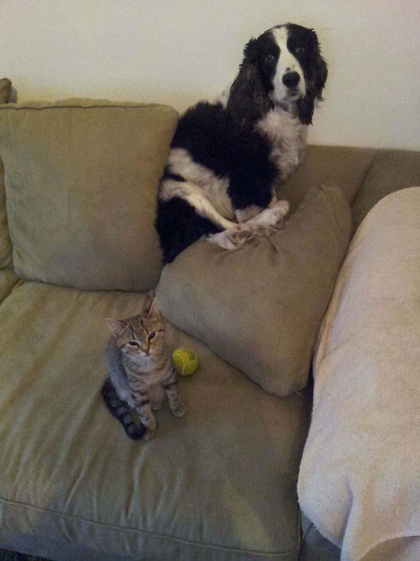 Φωτογραφίες σαν το σκύλο με τη γάτα (13)