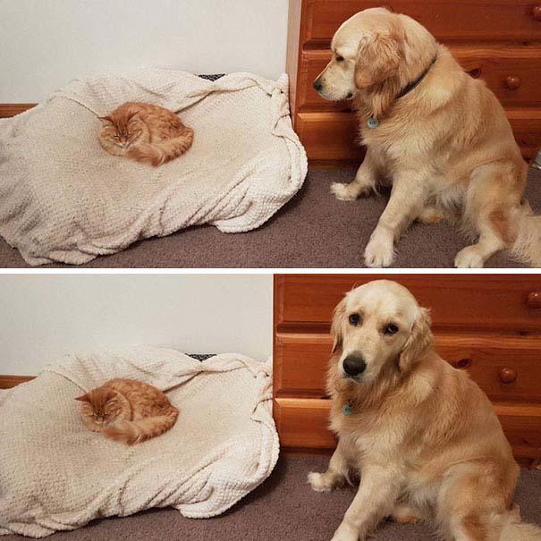 Φωτογραφίες σαν το σκύλο με τη γάτα (16)