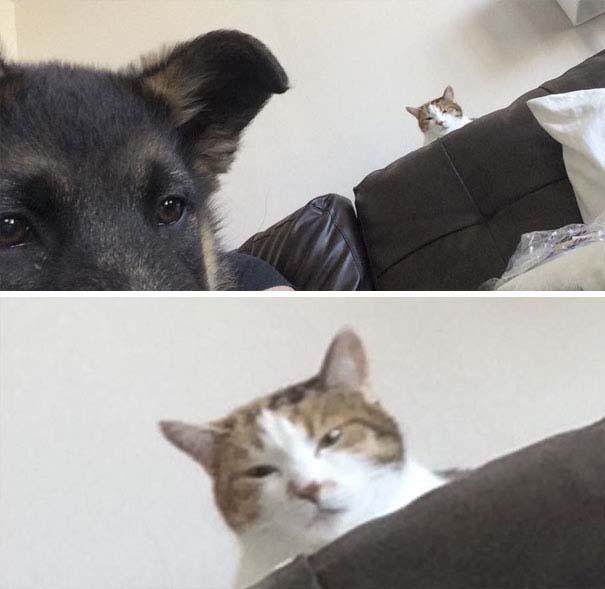 Φωτογραφίες σαν το σκύλο με τη γάτα (19)