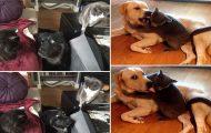 Φωτογραφίες σαν το σκύλο με τη γάτα