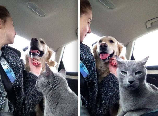 Φωτογραφίες σαν το σκύλο με τη γάτα (20)