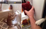 Γάτες που... κάνουν τα δικά τους! #65 (10)