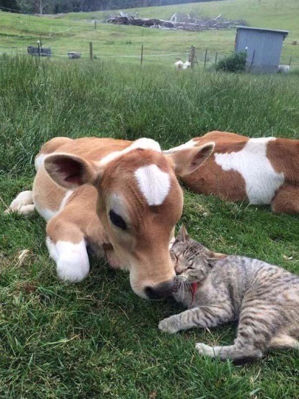 Γάτες που... κάνουν τα δικά τους! #63 (4)