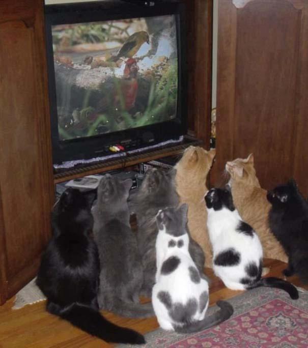 Γάτες που... κάνουν τα δικά τους! #64 (3)