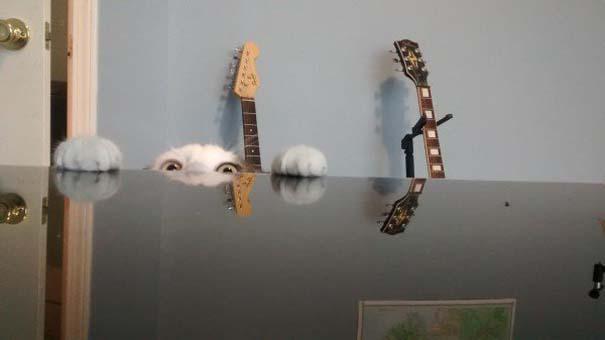 Γάτες που... κάνουν τα δικά τους! #63 (8)