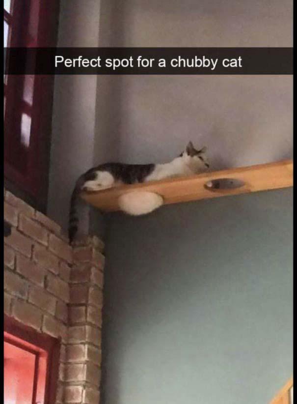 Γάτες που... κάνουν τα δικά τους! #63 (9)