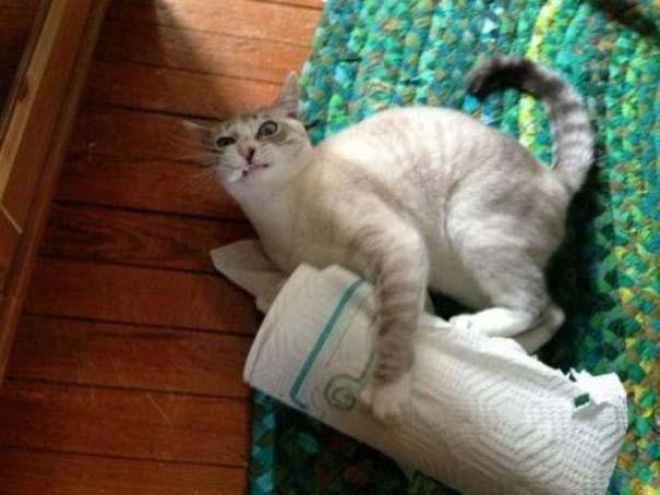 Γάτες που... κάνουν τα δικά τους! #65 (4)