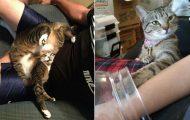 Γάτες που... κάνουν τα δικά τους! #64 (11)