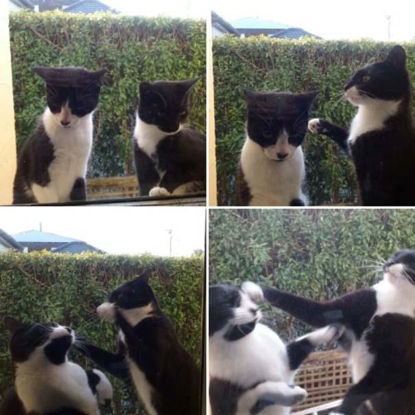Γάτες που... κάνουν τα δικά τους! #63 (10)